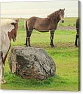 There Were Three Horsegirls And One Big Gray Stone  Canvas Print