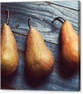 Three Gold Pears Canvas Print
