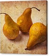 Three Golden Pears Canvas Print