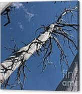 Three Gray Trees Canvas Print