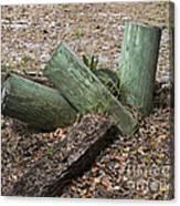 Three Green Logs Canvas Print