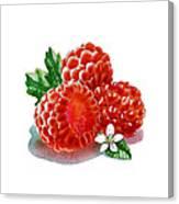 Three Happy Raspberries Canvas Print