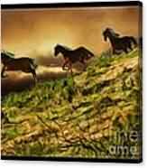 Three Horse's On The Run Canvas Print