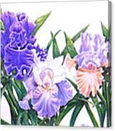 Three Irises Canvas Print