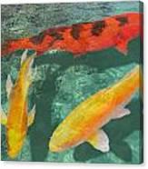 Three Mixed Koi Canvas Print