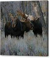 Three Moose In The Woods Canvas Print