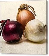 Three Onions - 1 Canvas Print