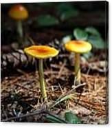 Three Orange Mushrooms Canvas Print