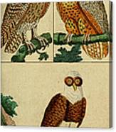 Three Owls Canvas Print