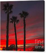 Three Palm Sunset Canvas Print