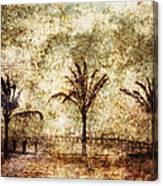Three Palms 6-2 Canvas Print