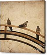 Three Pigeons Perched On A Metallic Arch. Canvas Print