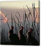 Three Rabbits In The Setting Sun Canvas Print