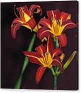 Three Red Daylilies Canvas Print