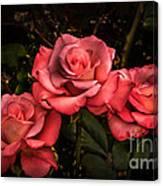 Three Roses Canvas Print