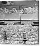 Three Sailboats Canvas Print
