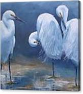 Three Snowy Egrets Canvas Print
