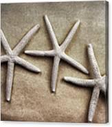 Three Starfish Canvas Print