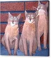 Three Tan Cats Canvas Print