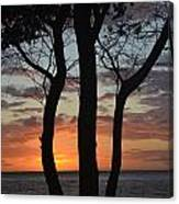 Three Trees At Sunset  Canvas Print