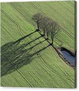 Three Trees, Montaigu Canvas Print