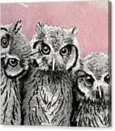 Three Wise Owls Canvas Print
