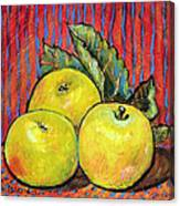 Three Yellow Apples Canvas Print
