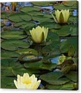 Three  Yellow Lilies Canvas Print
