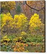 Three Yellow Trees Canvas Print