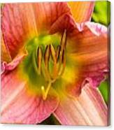 Throat Of Lily Canvas Print