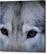 Through A Wolf's Eyes Canvas Print