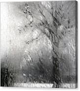 Through Glass -- A Tree In Winter Canvas Print