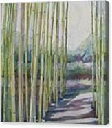 Through The Bamboo Grove Canvas Print