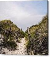 Through The Dunes Canvas Print