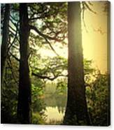 Through The Forest To The Lake Canvas Print