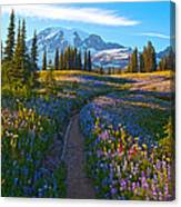 Through The Golden Meadows Canvas Print
