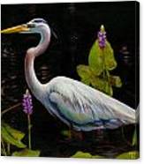Through The Pickerelweed Canvas Print