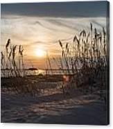 Through The Reeds Canvas Print