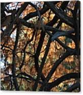 Through The Trees 2 Canvas Print