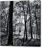 Through The Trees In Black And White Canvas Print