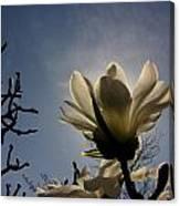 Thru The Flowers 2 Canvas Print