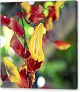 Thunbergia Mysorensis - Trumpetvine Canvas Print
