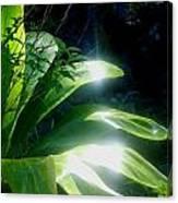 Ti Light Canvas Print