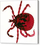 Tick Canvas Print