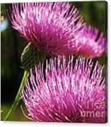 Tickled Thistle Canvas Print