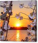 Tidal Basin Sunset With Cherry Blossoms Canvas Print