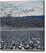 Tidal Wave Of Geese Canvas Print