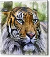 Tiger 26 Canvas Print