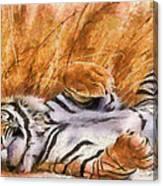 Tiger - Big Cat Canvas Print