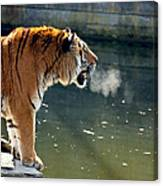 Tiger Breathing Into Cold Air By The Water Canvas Print